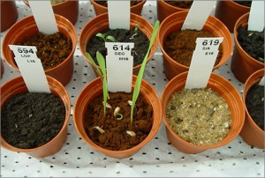 Work is underway to study food cultivation system for Mars. Credit: Wageningen UR