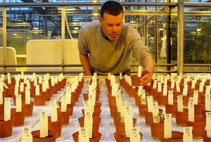 The soil on Mars may be suitable for cultivating food crops.  Credit: Wageningen UR
